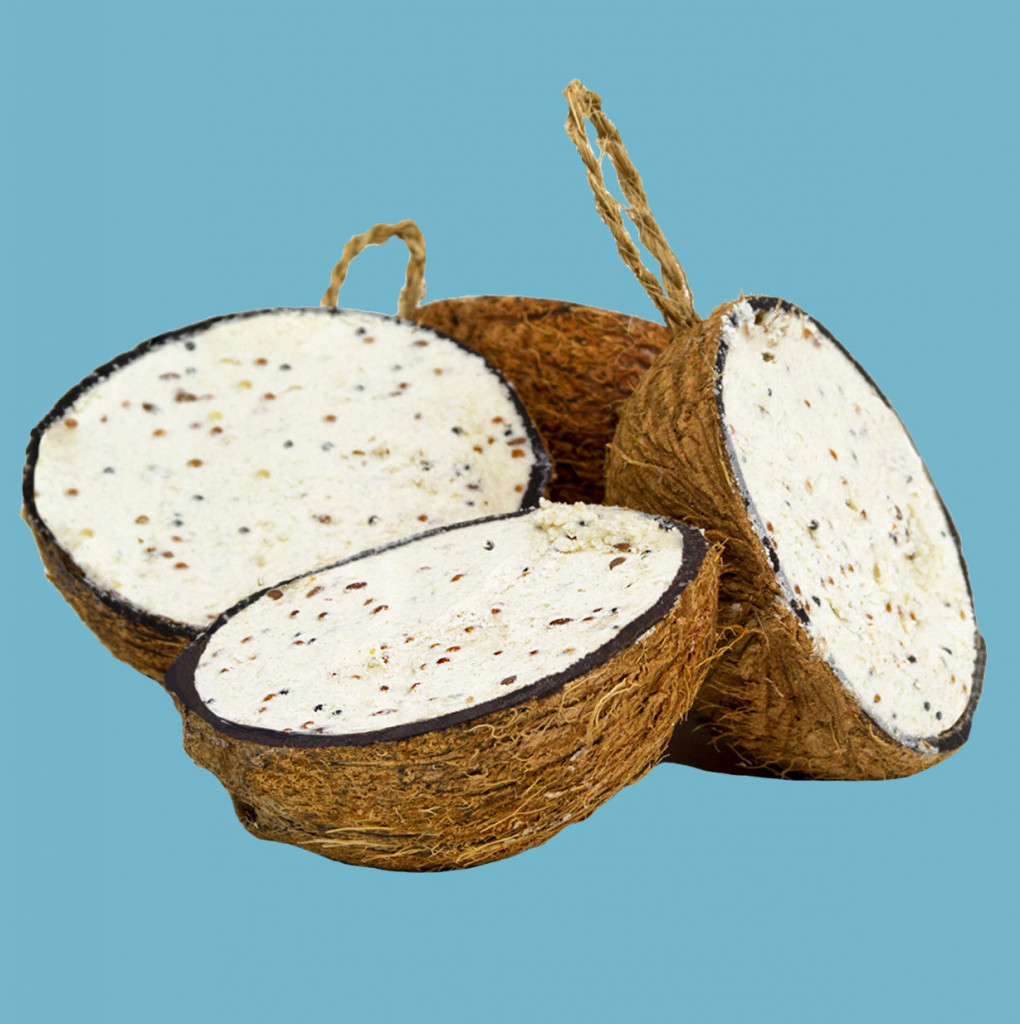 Mealworm Half Coconut